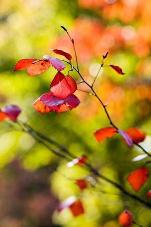 Feuilles de l'automne color� sur belle journ�e ensoleill�e