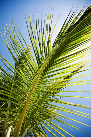 Detail of palm tree leaves in backlight photo