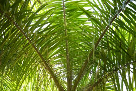 Close up of palm tree in backlight photo