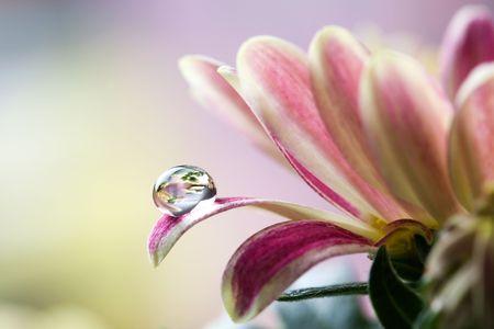 Close up of flower petals, shallow focus