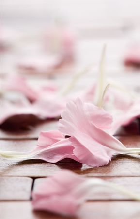 Pink flower petals on table Stock Photo