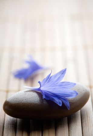 Blue cornflower petals on table photo
