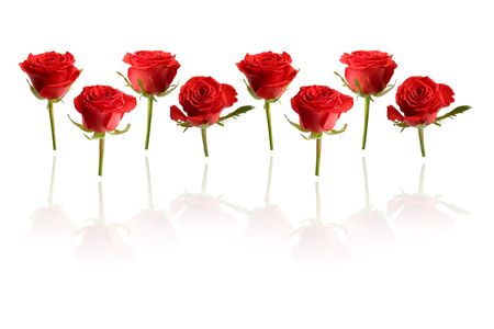 Row of red roses with reflection
