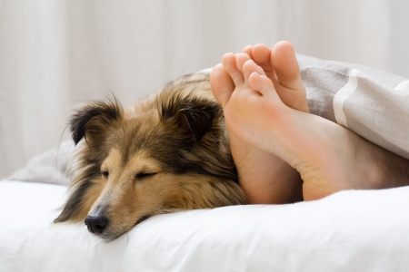 Dog sleeping on the bed by owners feet Stock Photo - 4198346