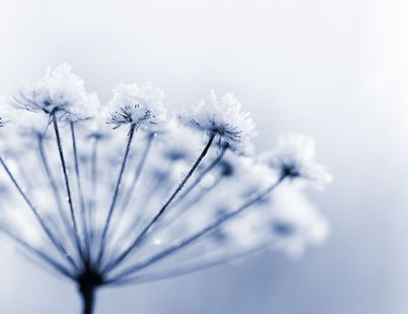 Frozen flower in blue tone, very shallow focus Stock Photo - 5826961