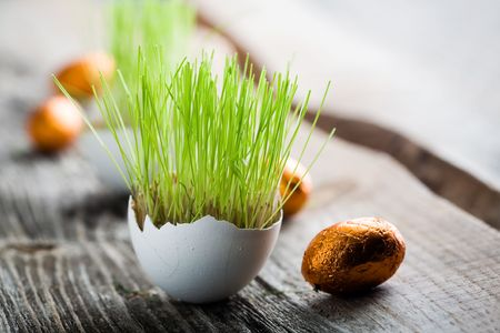 Easter grass growing in egg shell, shallow focus Stock fotó