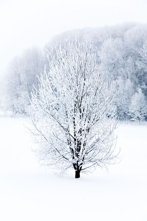 Beautiful tree covered with white frost and snow Stock Photo - 6187789