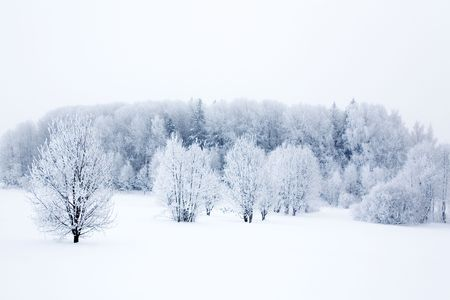 Winter landscape with frosty trees and bushes Stock Photo - 6187787