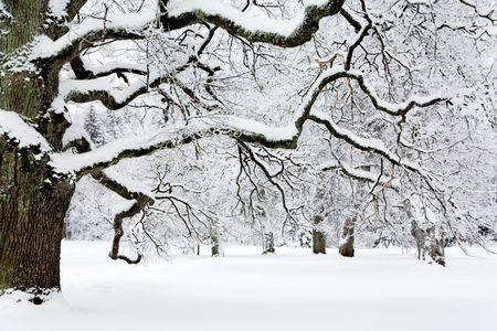 Winter Stock Photo - 6234129