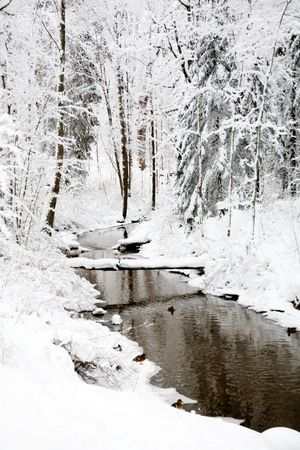 Small river in the middle of forest Stock Photo - 6234128