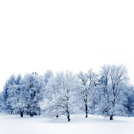 Big oak and maple trees covered with white frost, Stock Photo - 6234130