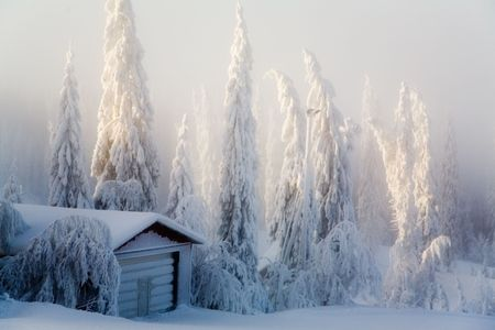 Winter scene with forest covered with thick snow photo