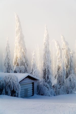 Winter scene with forest covered with thick snow Stock fotó