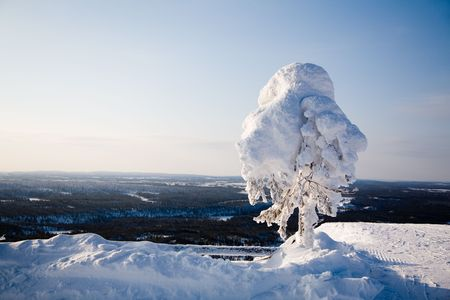 Beautiful winter landscape with snowy trees in Lapland Stock Photo - 6518115