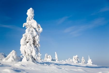lapland: Beautiful winter landscape with snowy trees in Lapland