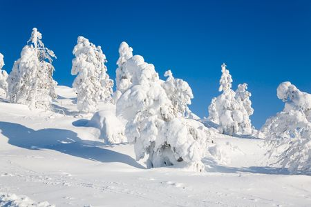 Beautiful winter landscape with snowy trees in Lapland photo