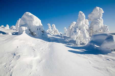 Beautiful winter landscape with snowy trees in Lapland Stock Photo - 6518122