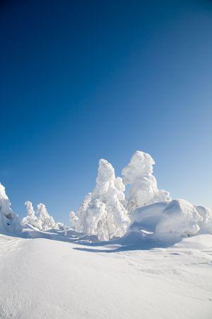 laponie: Hiver beau paysage avec arbres neigeux en Laponie