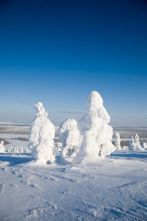 Beautiful winter landscpe with snow in Lapland Finland photo