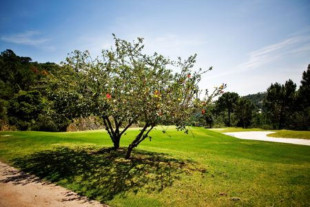 Golf course with beautiful tree with flowers photo