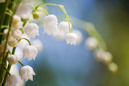 Bunch of beautiful lily of the valley Stock fotó