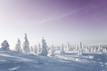 winter scenery: Cold winter with lot of snow and blue sky