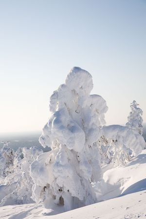 Cold winter with lot of snow and blue sky Stock Photo - 7745310