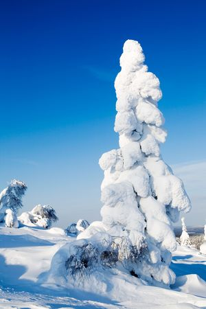 Cold winter with lot of snow and blue sky photo