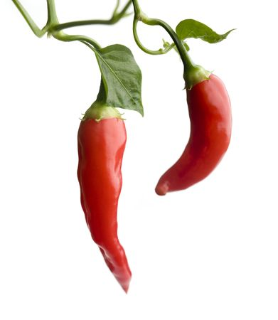 red chili pepper: Red hot chili peppers on white isolated background Stock Photo