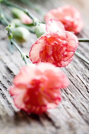 Close up of branches of dianthus on wooden table Stock Photo - 8740874