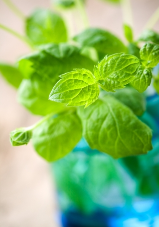 Bunch of fresh mint in blue glass photo