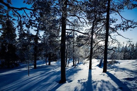 Winter landscape from Lapland Finland, selective focus Stock Photo - 8918122