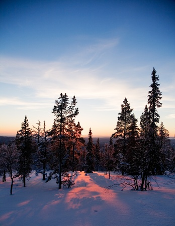 Winter landscape from Lapland Finland, selective focus photo