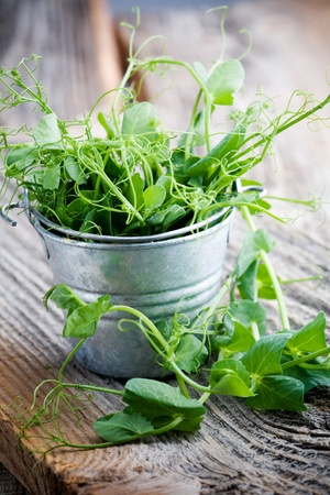 Fresh pea sprouts in little bucket, selective focus photo