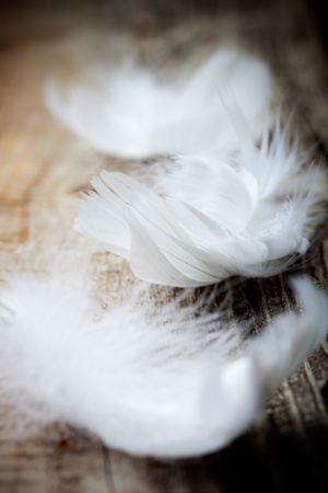 White feathers on wooden table, selective focus Stock Photo - 12594585