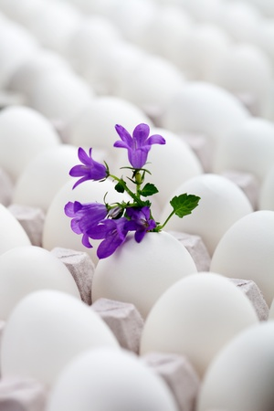 Bunch of white eggs with colorful decorations photo