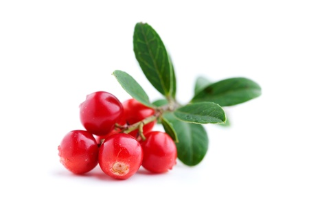 Fresh lingonberries with some leaves isolated on white