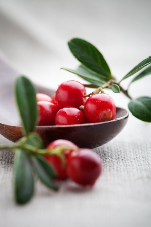 Fresh lingonberries with some leaves, selective focus photo