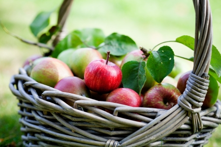 Fresh and colorful apples in basket, selective focus photo