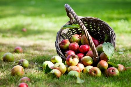 バスケット、選択と集中で新鮮なカラフルなリンゴ 写真素材