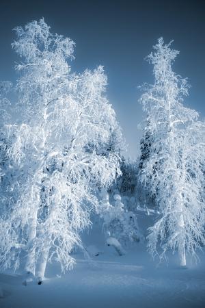sunny cold days: Beautiful winter landscape in light blue tone