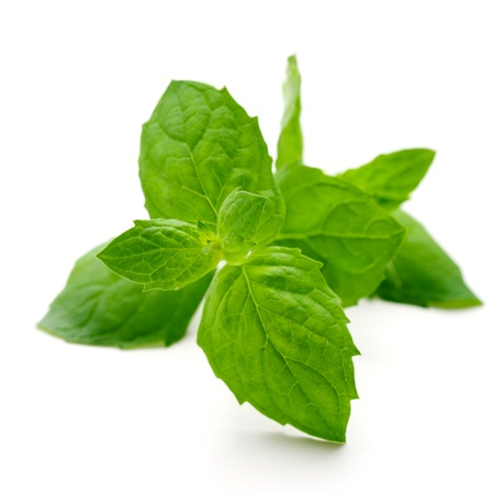 peppermint: Fresh mint leaves on white isolated background Stock Photo