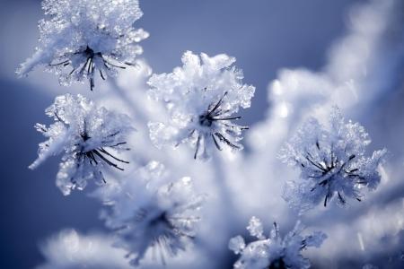 氷と雪で覆われた花のクローズ アップ 写真素材