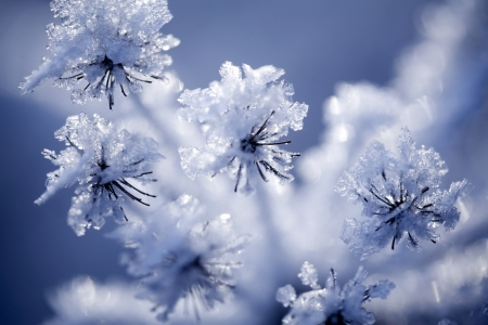 close up: Close up of flower covered with ice and snow