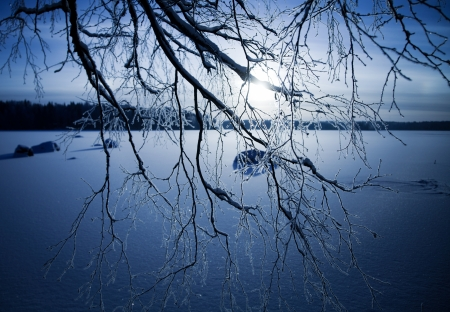 Beautiful winter sunset through frozen birch branches photo
