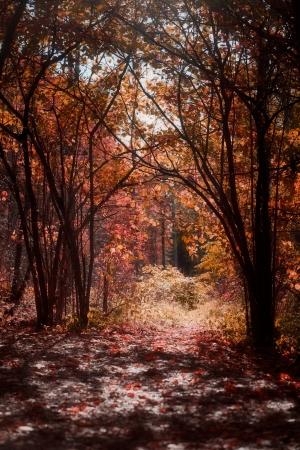 明るい赤とオレンジの秋の色の森