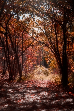 Forest in bright red and orange autumn colors