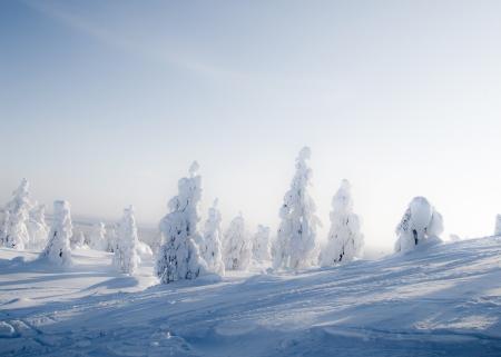 lapland: Beautiful sunny winter landscape in Lapland Finland Stock Photo
