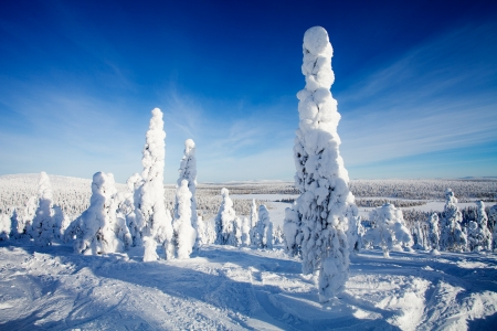 Beautiful sunny winter landscape in Lapland Finland photo