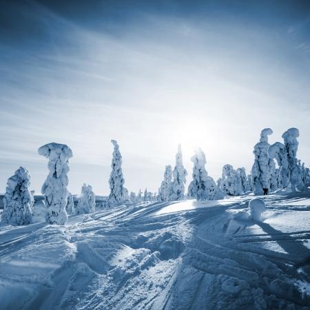 laponie: Beau paysage d'hiver ensoleill� en Laponie finlandaise